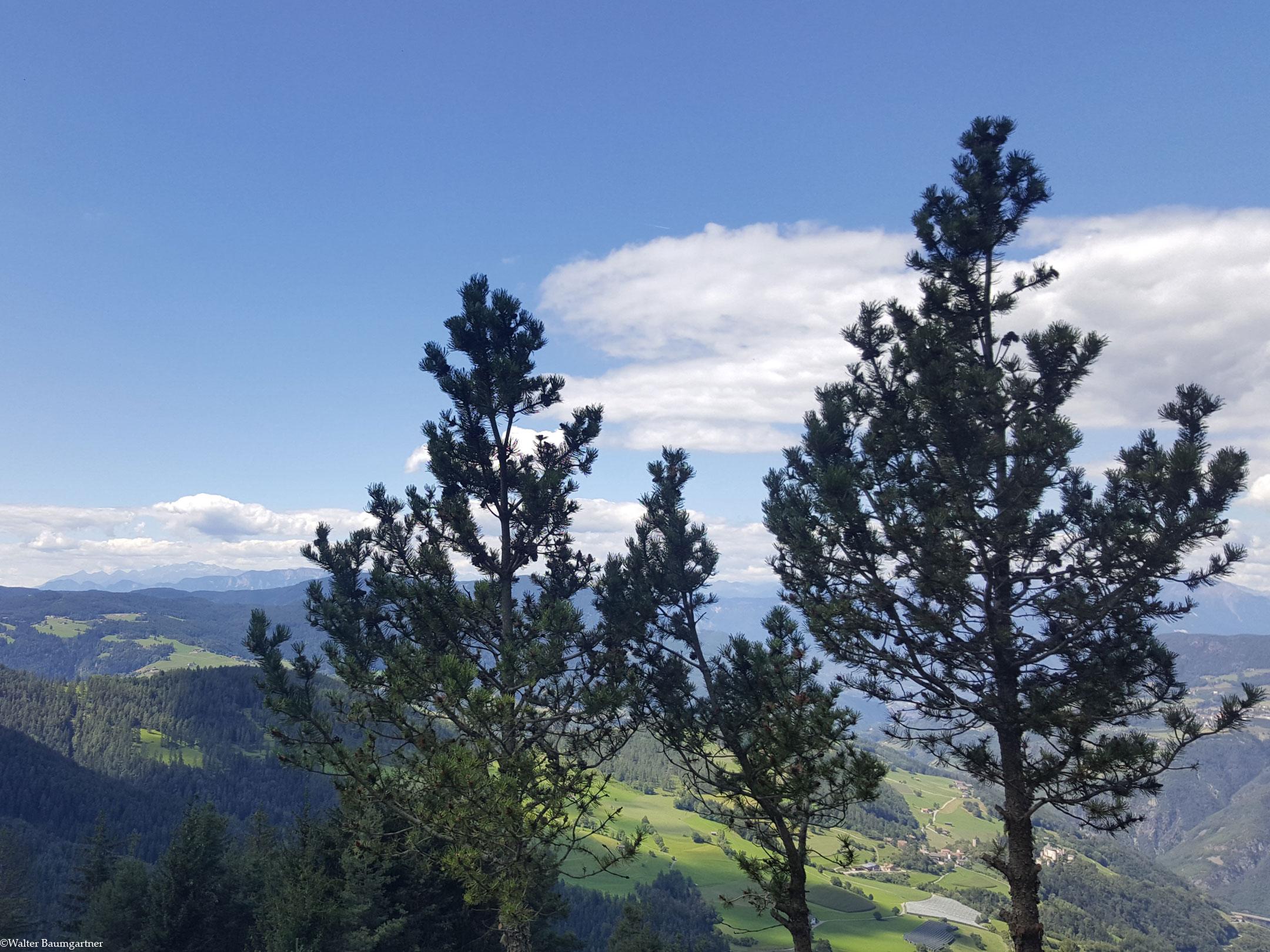 Wheelchair-Tours-Rollstuhl-Hofer-Alpl-Aussicht-Terrasse