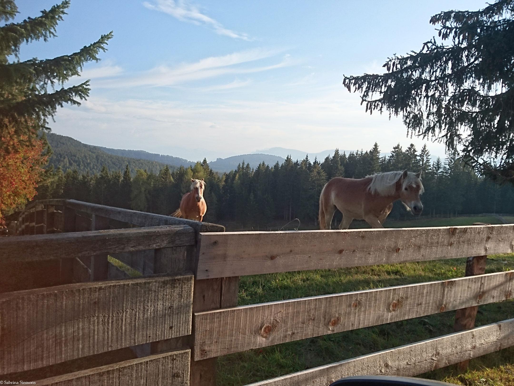 Tour in sedia a rotelle-Meraner-Huette-Haflinger