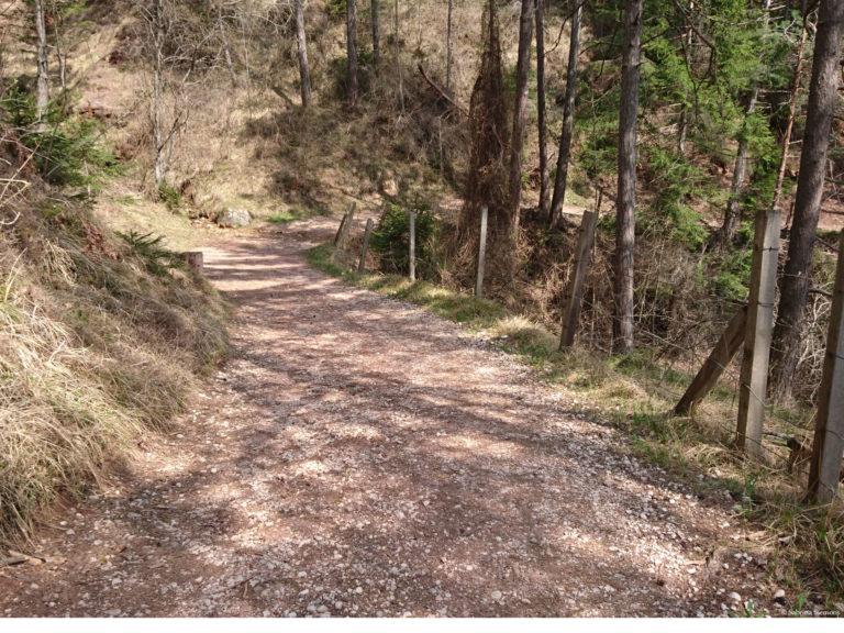 Wheelchair-Tours-Rollstuhl-Moarmühle-Wanderweg2-unterer-Weg-3-1