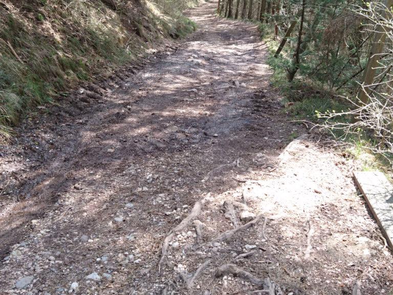 Wheelchair-Tours-Rollstuhl-Moarmühle-Wanderweg2-weiter-unten-1