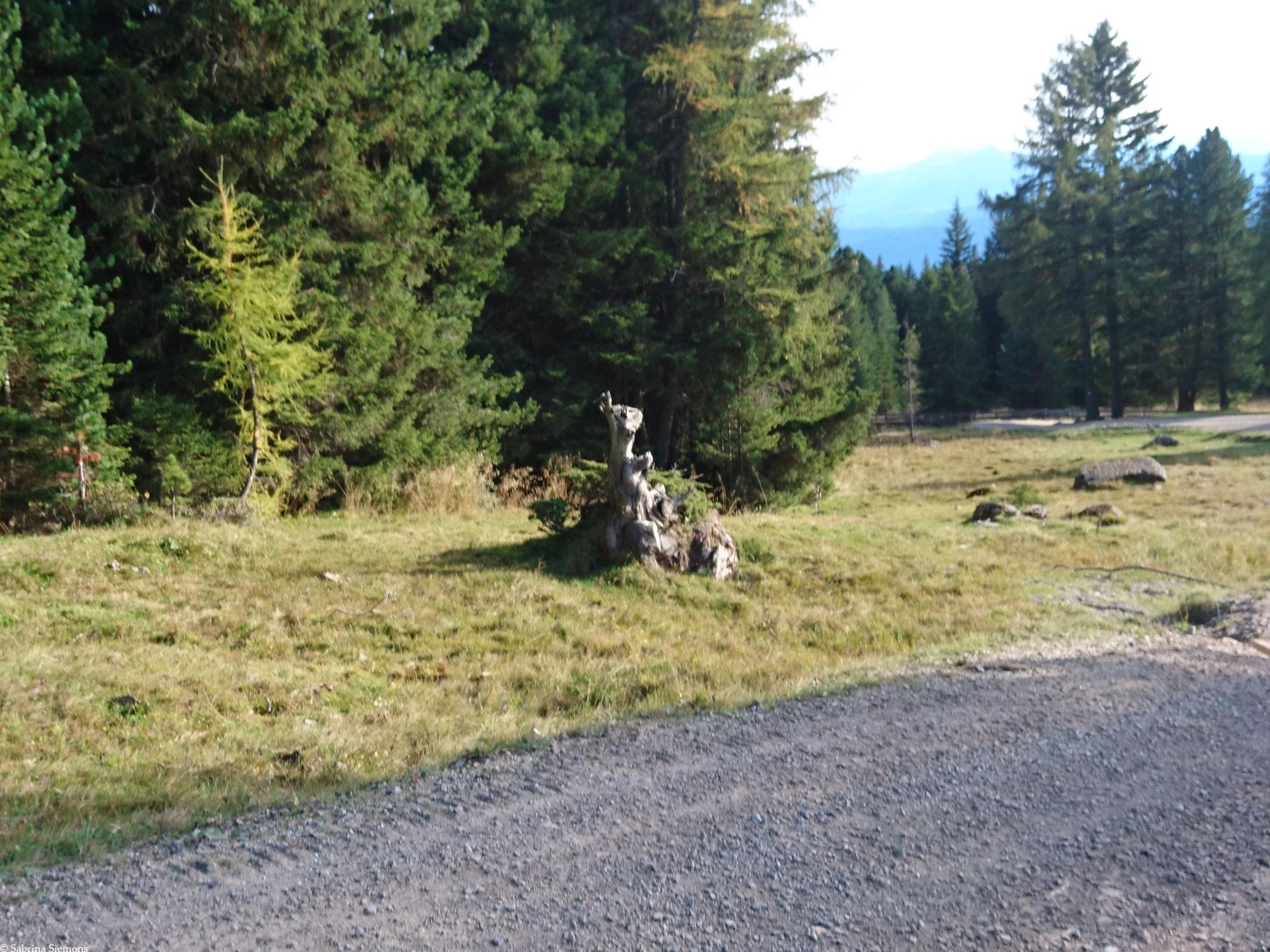 Wheelchair-Tours-Wheelchair-Rittner-Horn-Back-Way-Tree-Stump-1