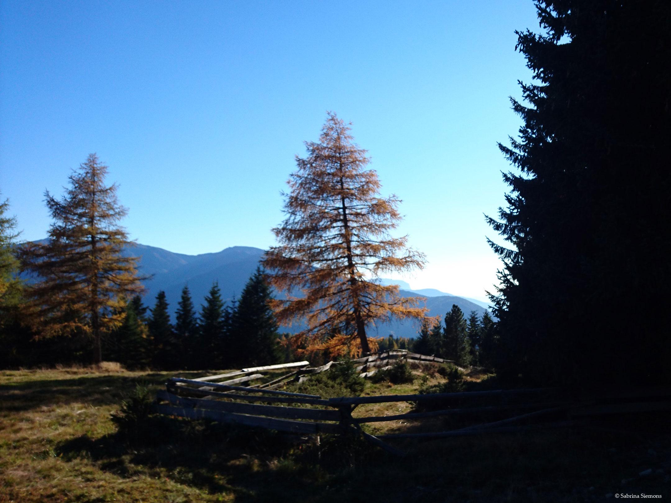 Wheelchair-Tours-Wheelchair-Rodenecker-Alm-View-Tree