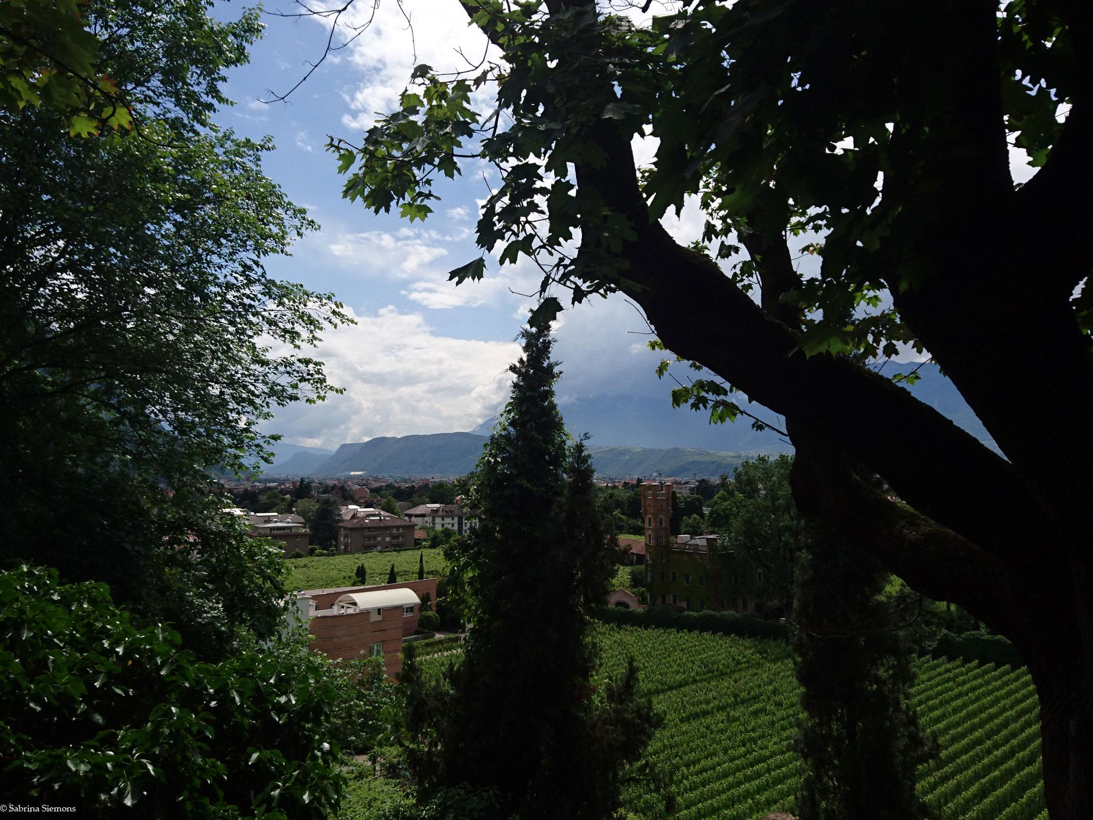 Wheelchair-Tours-Wheelchair-Walter-Promenade-View-Bolzano-Tree
