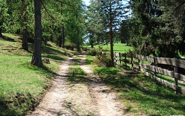 Wheelchair-Tours-Wheelchair-Eisacktal-Schnaggenkreuz-Weg-von-Proesels-zum-Schnaggenkreuz-Weg-durch-den-Wald