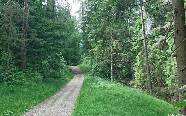 Wheelchair-Tours-Wheelchair-Eisacktal-Schoenblick-Schnaggenkreuz-Waldweg-Direction-Schnaggenkreuz