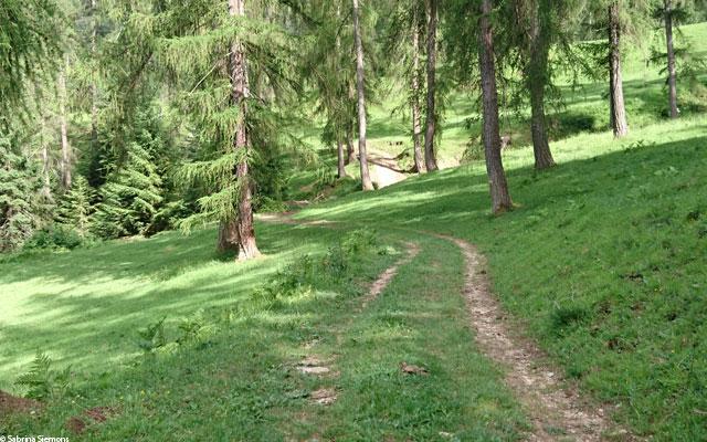 Wheelchair-Tours-Wheelchair-Eisacktal-Schoenblick-Schnaggenkreuz-Waldweg-Direction-Ums-gleich-am-Anfang