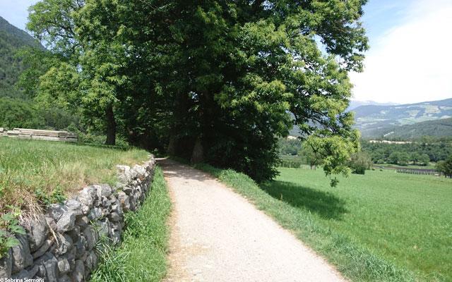 Wheelchair-Tours-Rollstuhl-Eisacktal-Brixen-Vahrner-See-Keschtenweg
