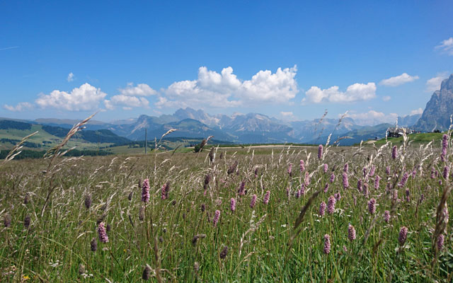 Wheelchair-Tours-Wheelchair-Hiking-Seiser-Alm-Mahlknechthuette-Outlook-Alm-Panorama-featured-image