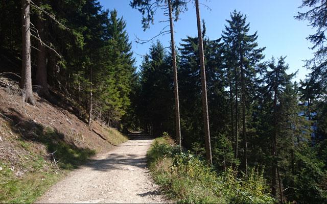 Wheelchair-Tours_Rollstuhl-Touren-Meran-Umgebung-Virgiljoch-der-Wald-lichtet-sich