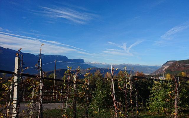 Carrozzina_Tours_Rollstuhl_Unterland_Trudner_Horn_last_piece_vines