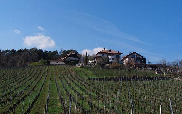 Tour in sedia a rotelle- Escursioni in sedia a rotelle-Unterland-Suedtirol-AltoAdige-Montiggler-See-Montiggl