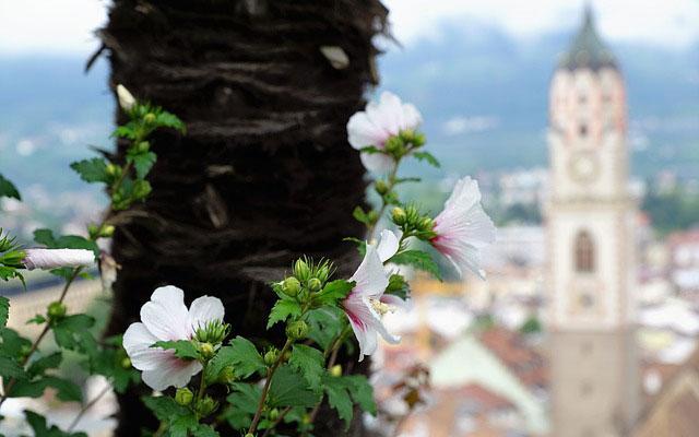 Aussicht auf Meran mit Blüte