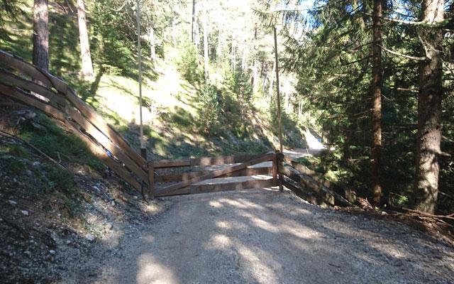 Gatter am Ende des Waldabschnitts