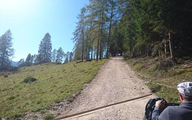 Forststraße hinterm Waldabschnitt