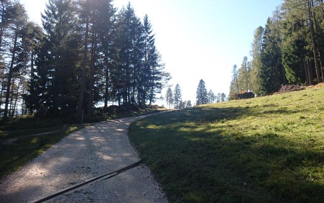 Abschnitt direkt nach dem Gatter im Wald