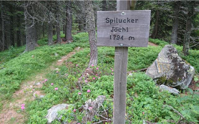 Shortly before the alp - Spilucker Jöchl