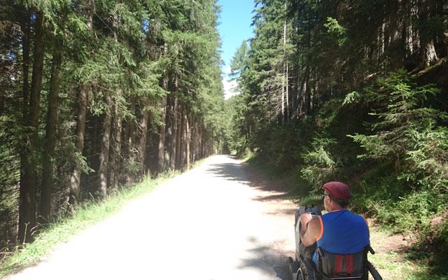 In estate si può godere della foresta ombreggiata