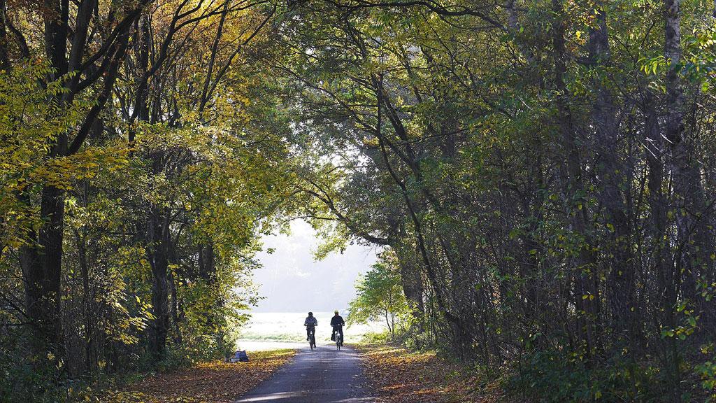 In bicicletta attraverso la foresta decidua nel Münsterland
